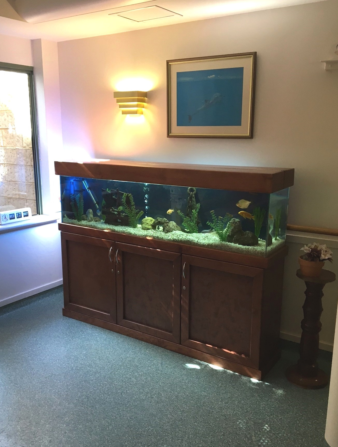 6ft Jarrah aquarium rentals Perth