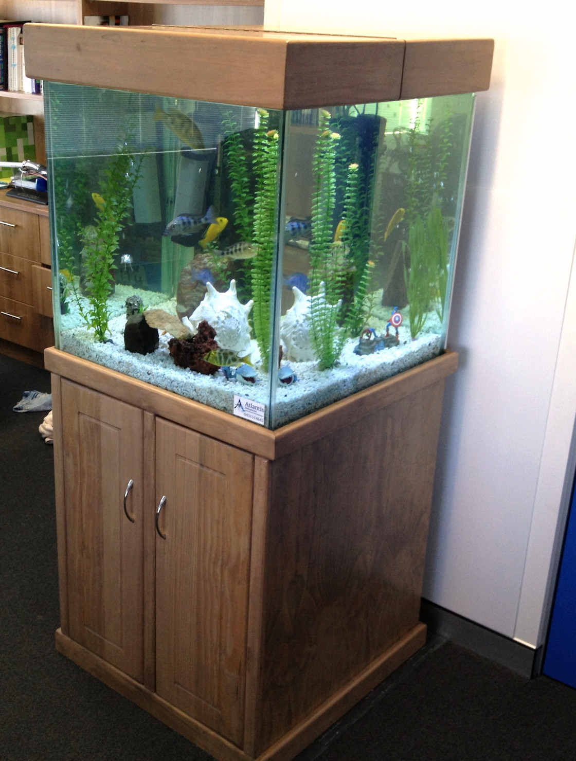 Square Aquarium Rentals Perth