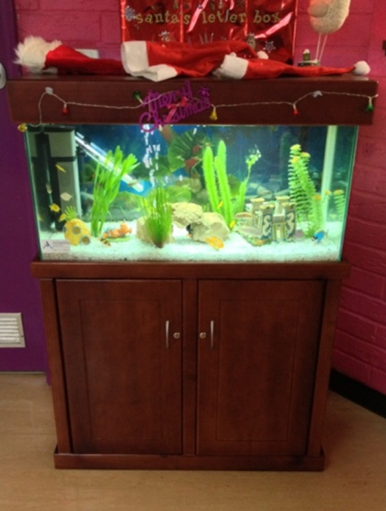 Aquarium Hire Perth
