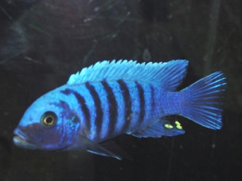 Fish Tank Rentals Perth