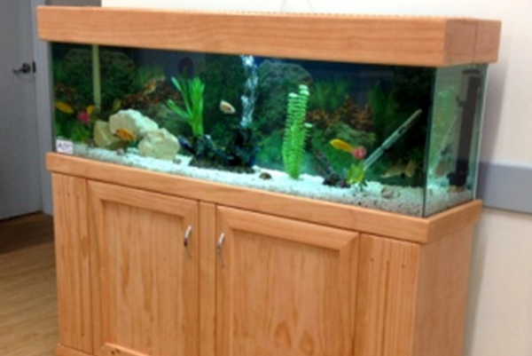 Aquarium Rental Perth