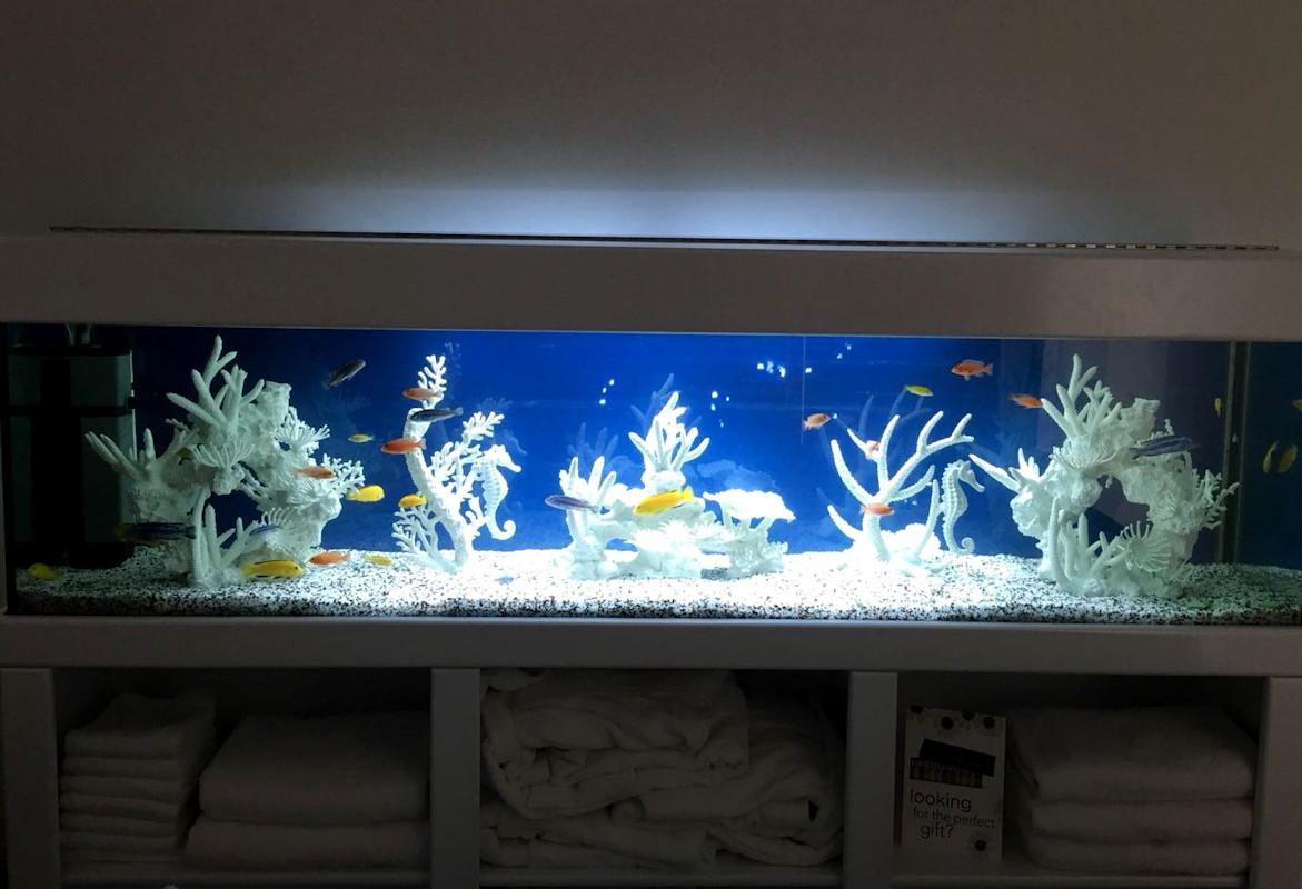 Aquarium Hire Perth WA