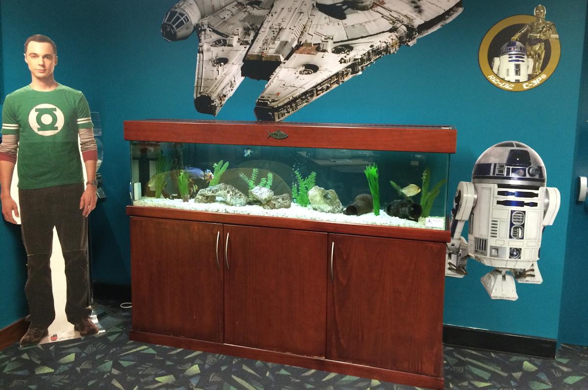 Fish Tank Hire Perth